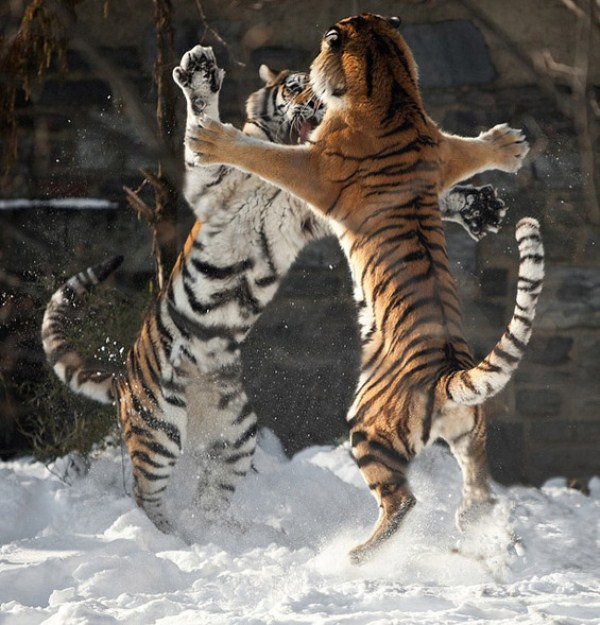 Animal Battles 4