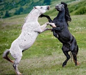 Wild Animal Fights (43 photos) 40