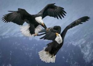 Wild Animal Fights (43 photos) 41