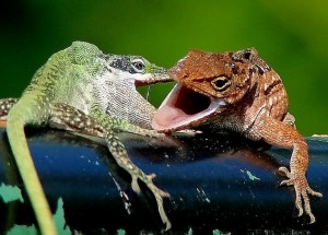 Wild Animal Fights (43 photos) 5