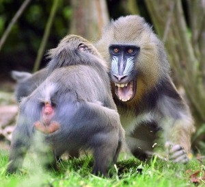Wild Animal Fights (43 photos) 6
