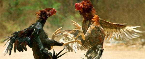 Animal Battles 7