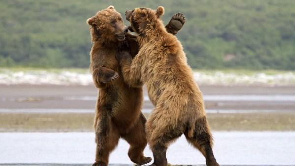 Animal Battles 8