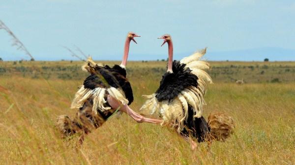Animal Battles 9