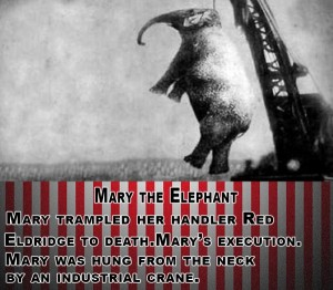 10 Circus Disasters Throughout History (10 photos) 6