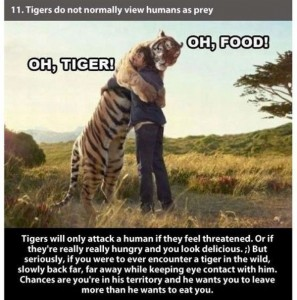 22 Interesting Facts about Tigers (22 photos) 3