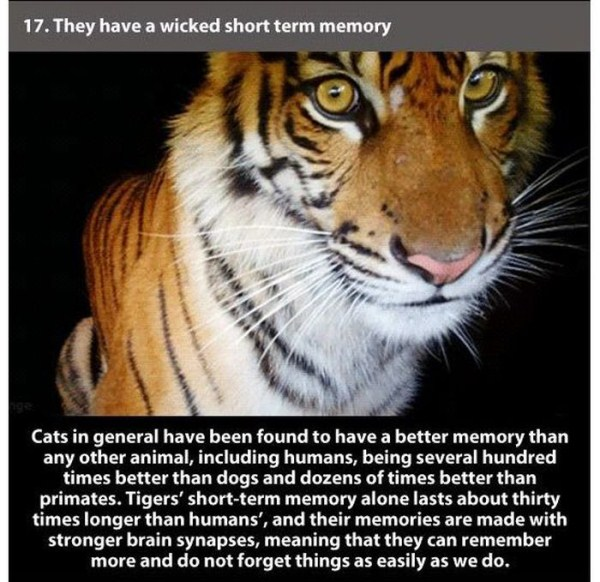 badass_facts_about_tiger_17_1