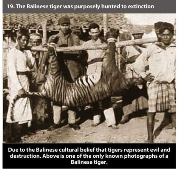 badass_facts_about_tiger_19_1