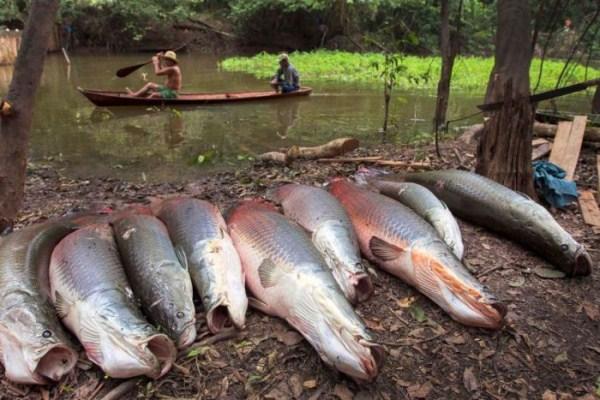 brazil_fishing_09_1