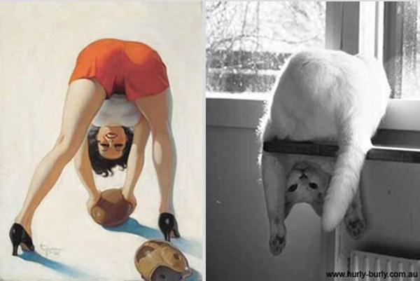 cats-posing (1)