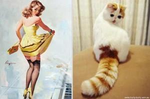 Cats Posing Like Pin Up Girls (24 photos) 10