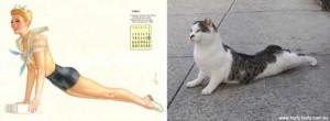 Cats Posing Like Pin Up Girls (24 photos) 18