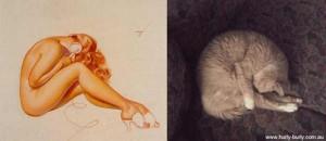 Cats Posing Like Pin Up Girls (24 photos) 19