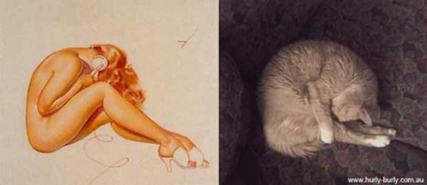 cats-posing (19)