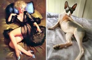 Cats Posing Like Pin Up Girls (24 photos) 3