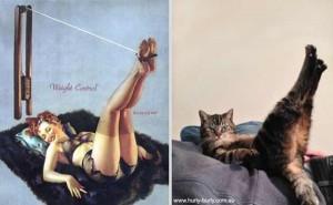 Cats Posing Like Pin Up Girls (24 photos) 4