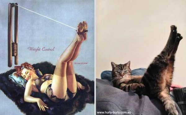 cats-posing (4)
