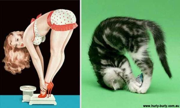 cats-posing (7)
