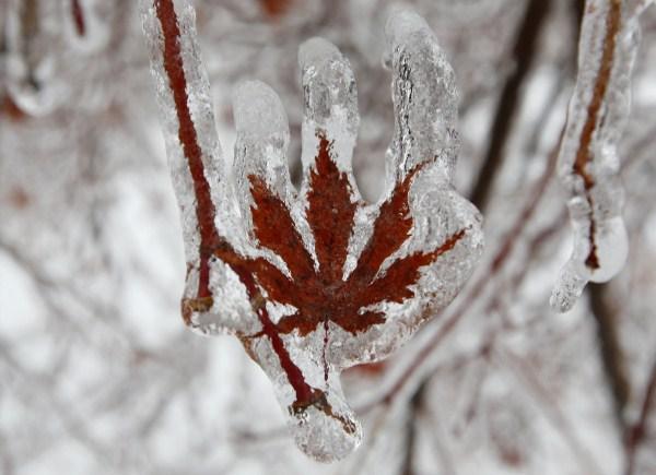 ice-storm (10)