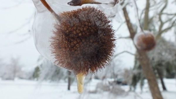 ice-storm (14)