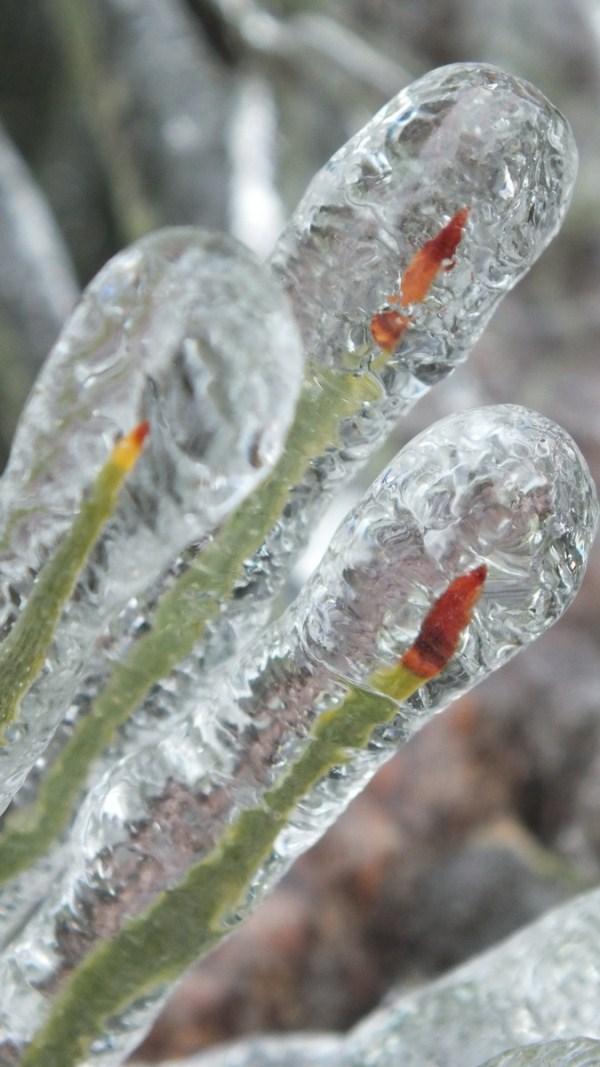 ice-storm (17)