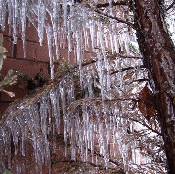 ice-storm (24)