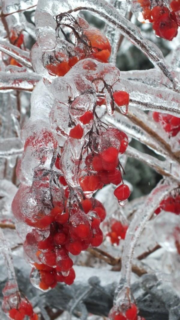 ice-storm (27)