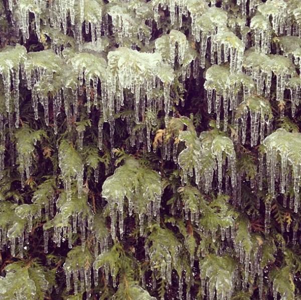 ice-storm (6)