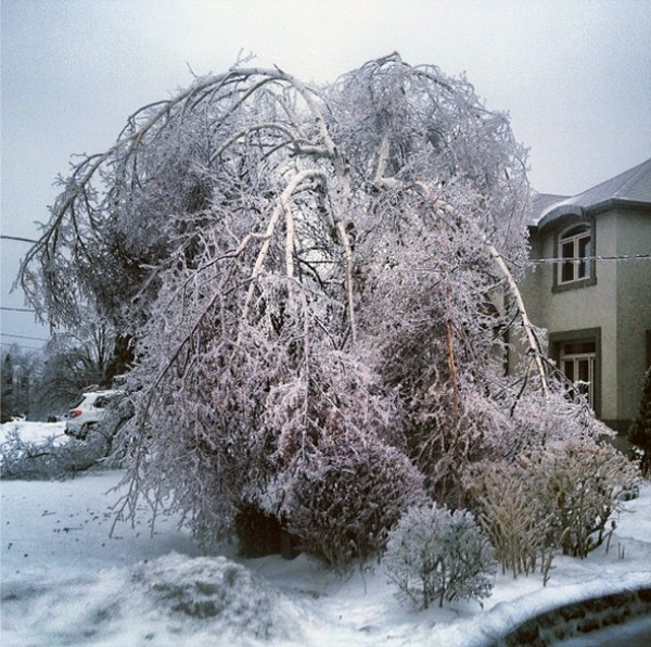 ice-storm (8)