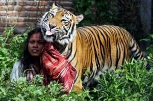 Meet Abdullah Sholeh And His Tiger Mulan (19 photos) 1