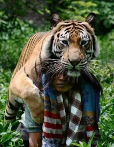 Meet Abdullah Sholeh And His Tiger Mulan (19 photos) 11
