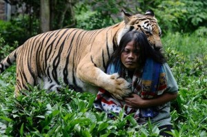 Meet Abdullah Sholeh And His Tiger Mulan (19 photos) 12