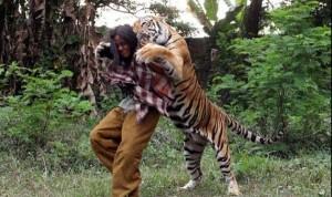 Meet Abdullah Sholeh And His Tiger Mulan (19 photos) 13