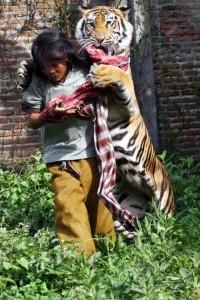 Meet Abdullah Sholeh And His Tiger Mulan (19 photos) 14