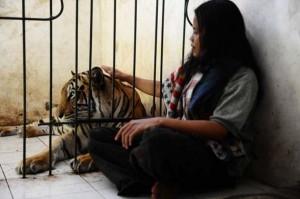Meet Abdullah Sholeh And His Tiger Mulan (19 photos) 15