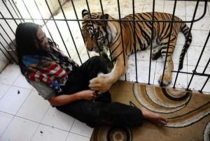 Meet Abdullah Sholeh And His Tiger Mulan (19 photos) 16