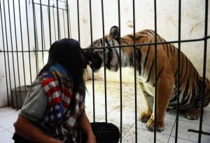 Meet Abdullah Sholeh And His Tiger Mulan (19 photos) 17