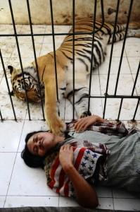 Meet Abdullah Sholeh And His Tiger Mulan (19 photos) 18