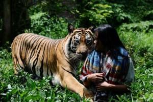 Meet Abdullah Sholeh And His Tiger Mulan (19 photos) 4