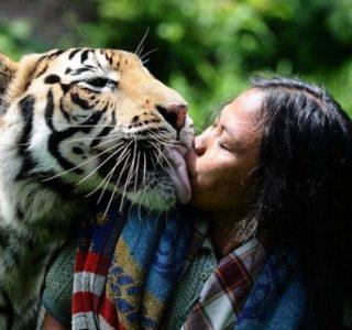 Meet Abdullah Sholeh And His Tiger Mulan (19 photos)