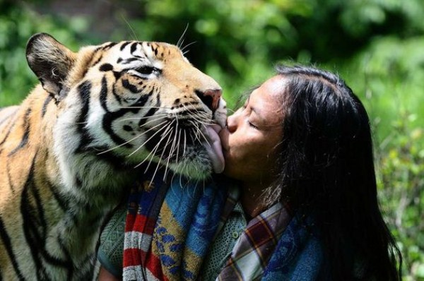 Meet Abdullah Sholeh And His Tiger Mulan (19 photos) 5