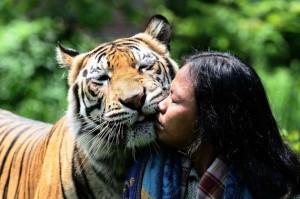 Meet Abdullah Sholeh And His Tiger Mulan (19 photos) 6