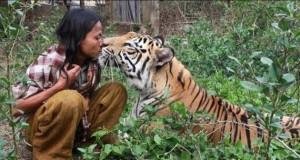 Meet Abdullah Sholeh And His Tiger Mulan (19 photos) 8