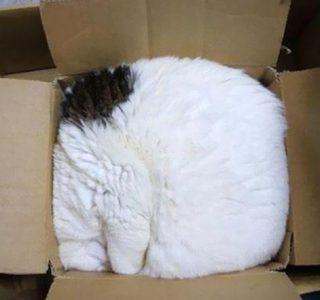 Totally Awkward Cat Sleeping Positions (58 photos)