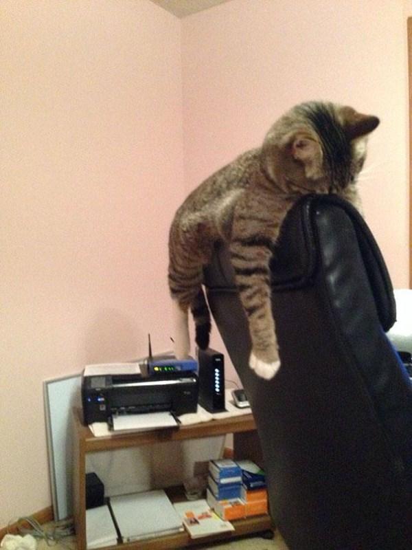 Crazy-Cat-Sleeping-Positions (12)