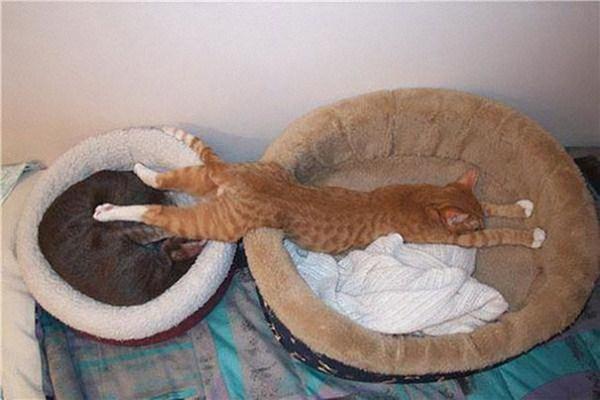 Crazy-Cat-Sleeping-Positions (13)