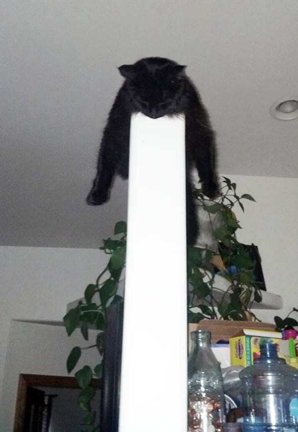 Crazy-Cat-Sleeping-Positions (14)