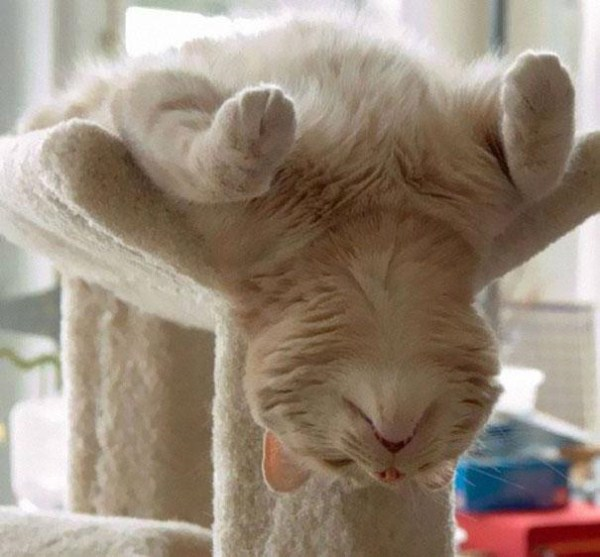 Crazy-Cat-Sleeping-Positions (15)