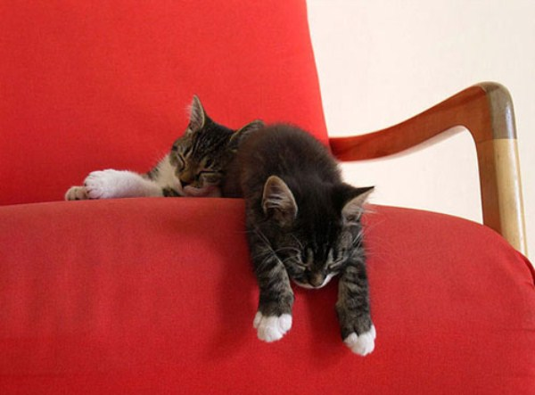 Crazy-Cat-Sleeping-Positions (19)