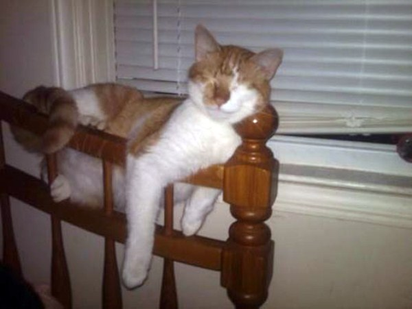 Crazy-Cat-Sleeping-Positions (2)